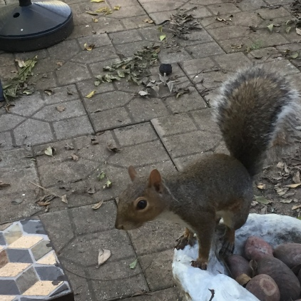Squirrel waiting for humans to leave his nuts alone