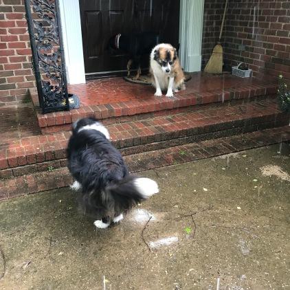 You two enjoy the rain. I'm going back inside.